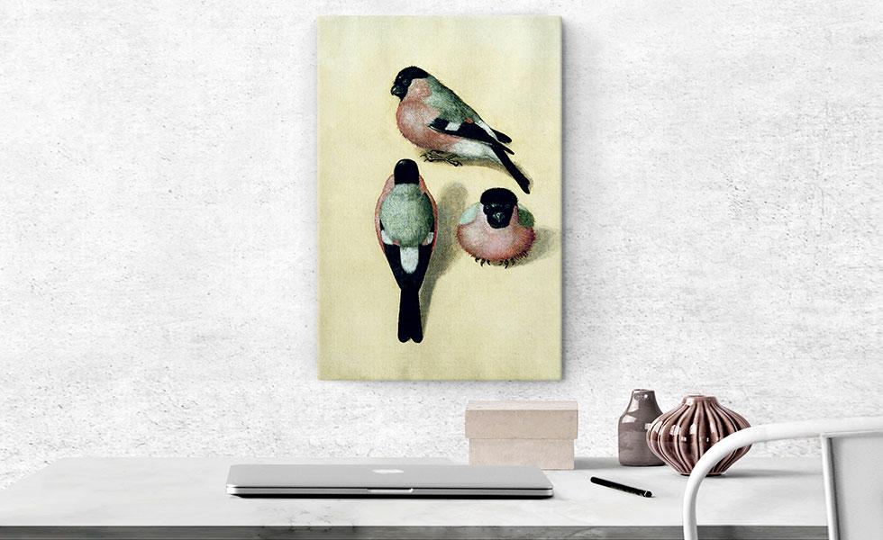Three Studies of a Bullfinch